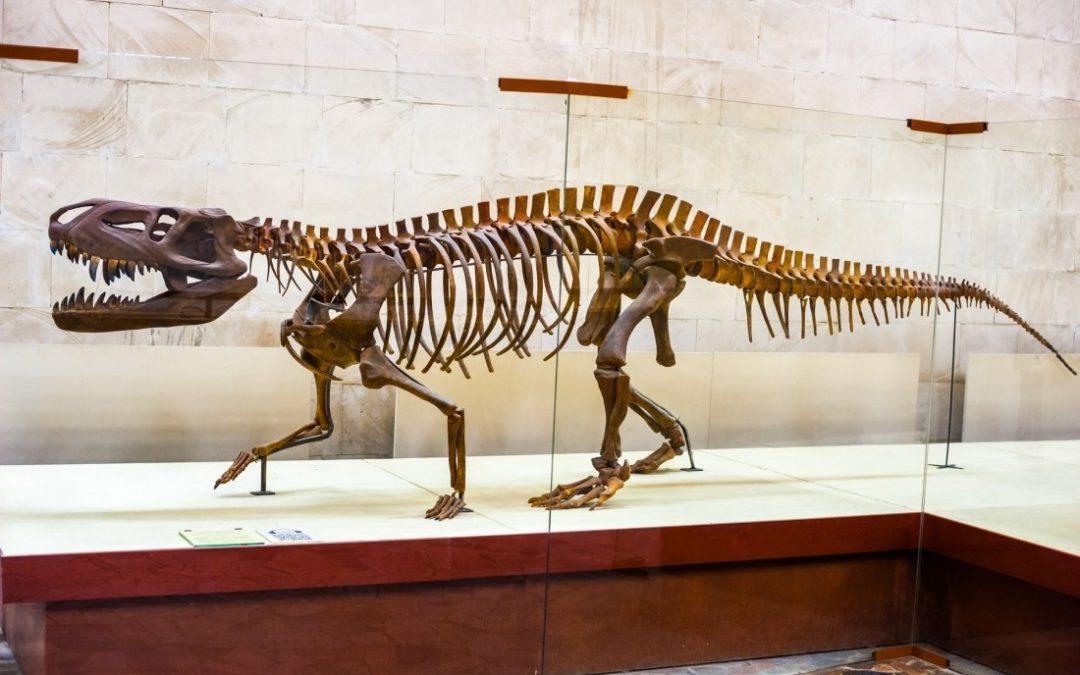 Как ученые узнают, сколько лет древним костям?