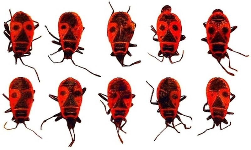 Мутации насекомых вблизи ЧАЭС